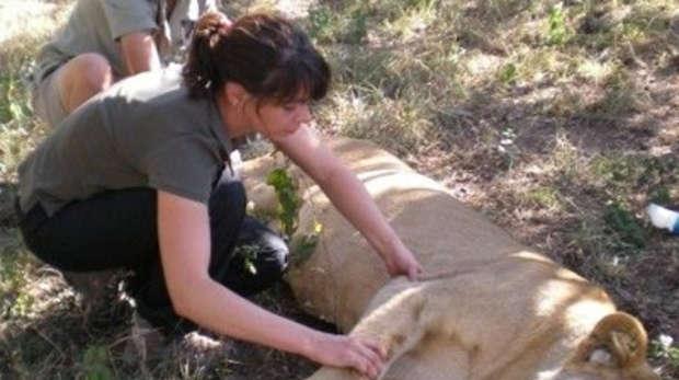 Celine Le Rochais - MSc in Wild Animal Health