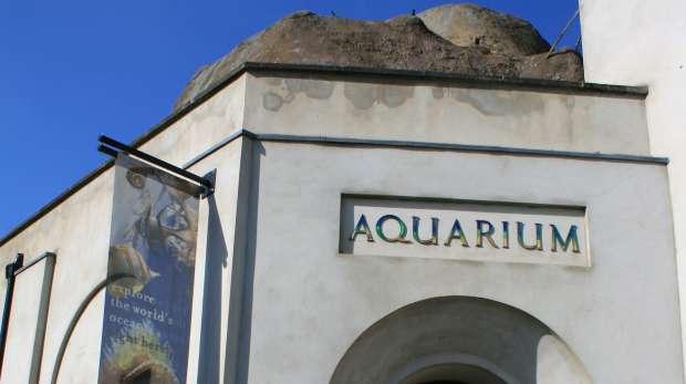 Aquarium at ZSL London Zoo
