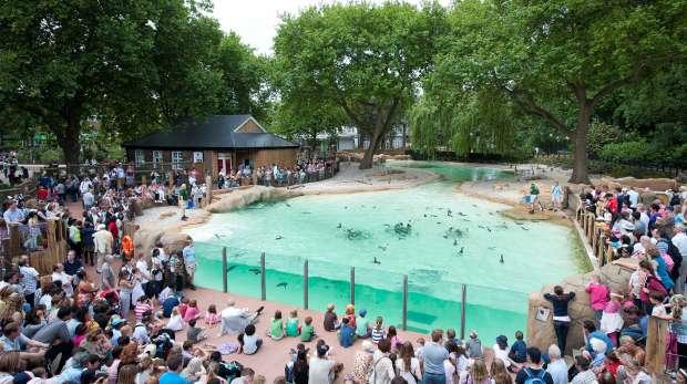 Penguin Beach Live demonstration
