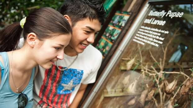 Students in the butterfly house at ZSL London Zoo