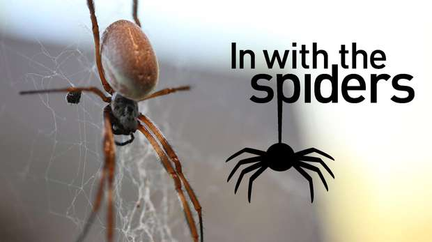 In With The Spiders