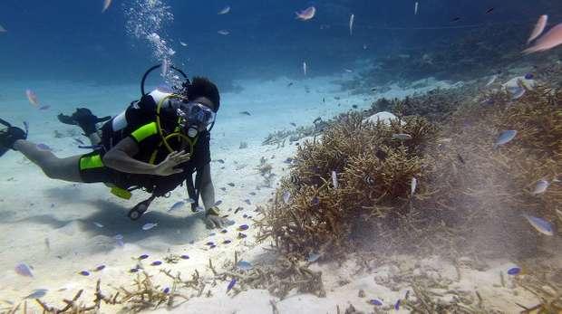 Claudia Naraina, diving Chagossian waters