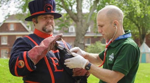ZSL health-check for Royal ravens