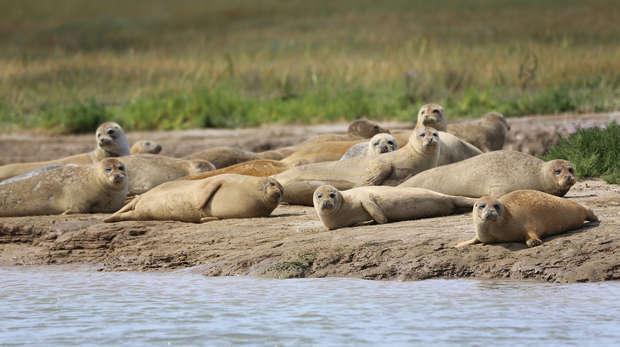 Seal survey 2016