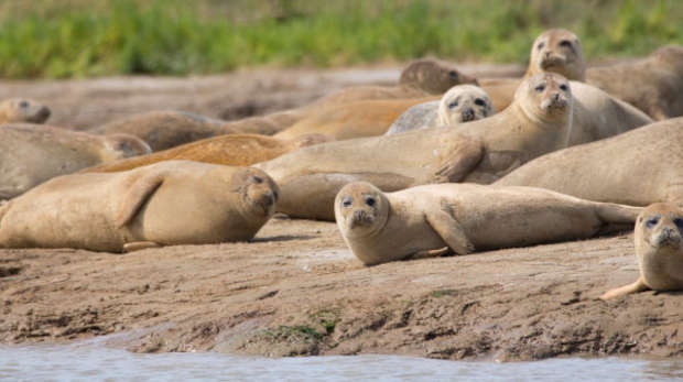 Seals spotted during the 2016 seal survey