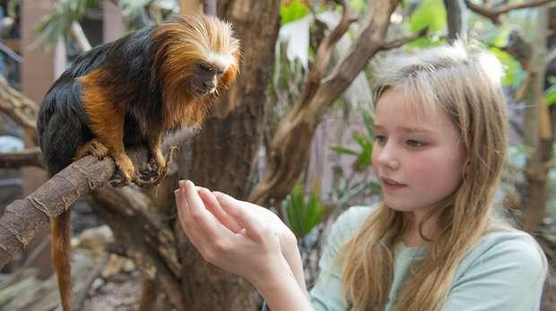 Meet the Rainforest at ZSL London Zoo