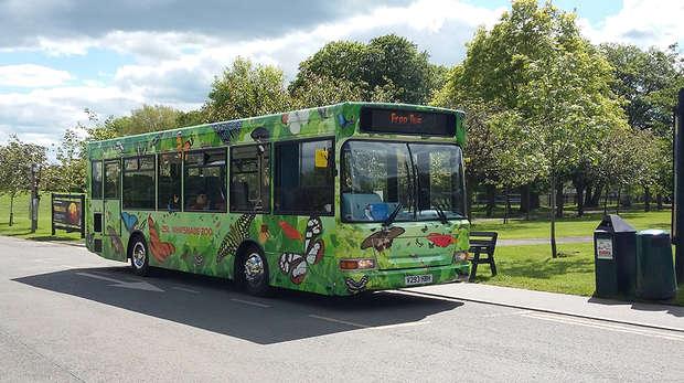 green single decker zoo bus