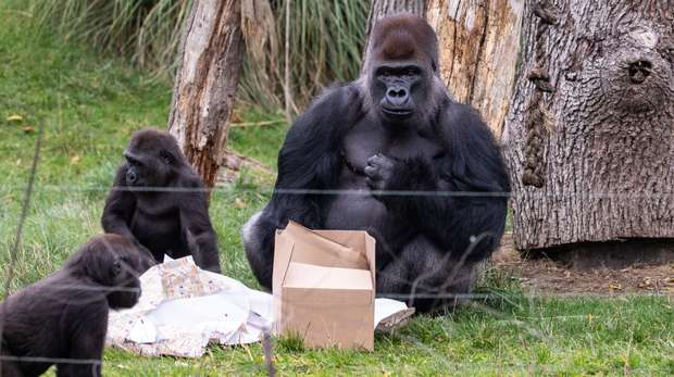 Gernot and Alika investigate the birthday present