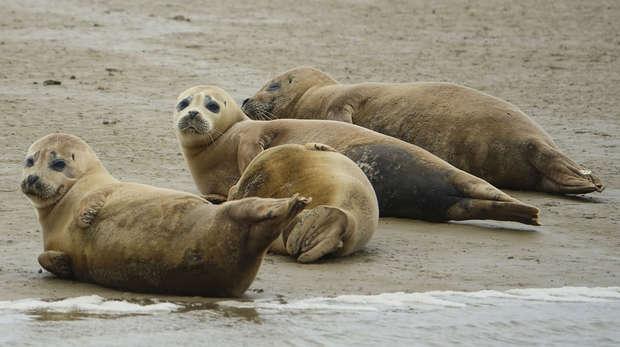 Thames seals
