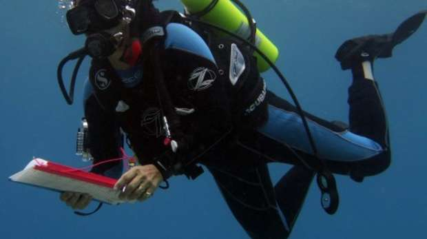 Melita Samoilys Grouper survey in Chagos