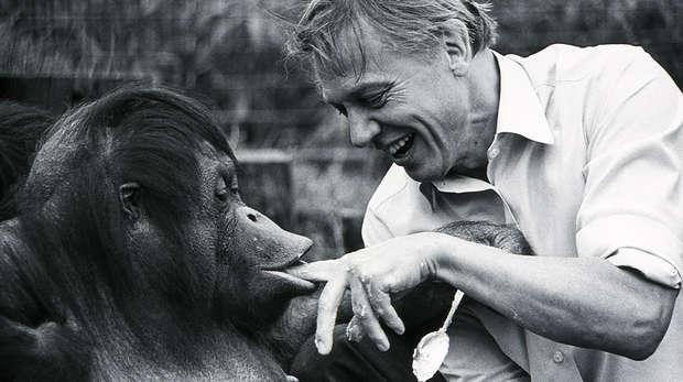 Sir David Attenborough and Bulu the orangutan