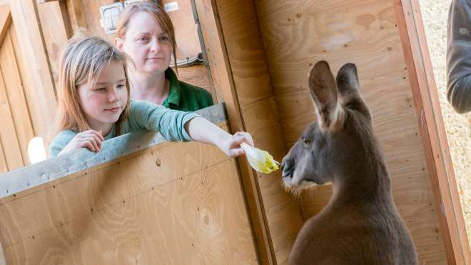 Children feed the red kangaroo as part of the meet the outback encounter