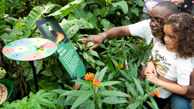Father and daughter looking at sign in Butterfly Paradise surrounded by plants.