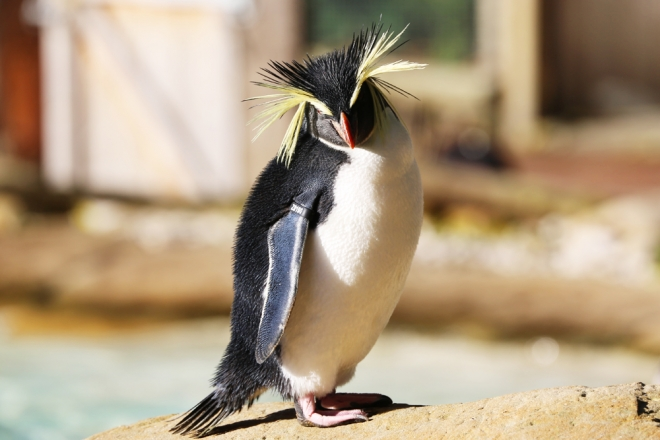 Ricky posing at Penguin Beach at ZSL London Zoo.