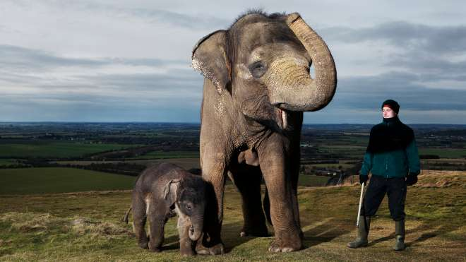 Elephant calf and mum at ZSL Whipsnade Zoo