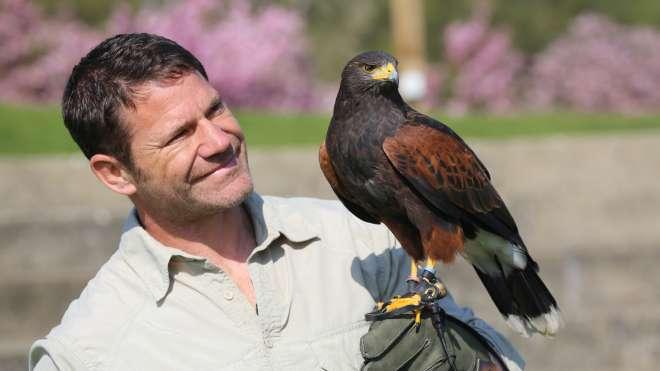 Steve Backshall  with Harris Hawk for deadly aerial assassins