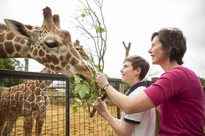 Mum and son feeding the giraffes for Meet the Giraffes experience