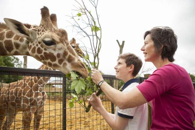 Mum and son feeding the giraffes for Meet the Giraffes experience