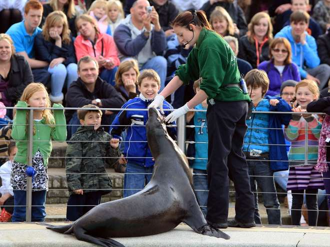 Children watching Sealion Splash