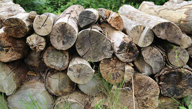 Log piles make excellent homes for all sorts of native insects